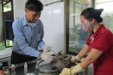 Trung tâm Cứu hộ, Bảo tồn và Phát triển sinh vật - Địa chỉ tin cậy trong công tác cứu hộ và bảo tồn động vật hoang dã